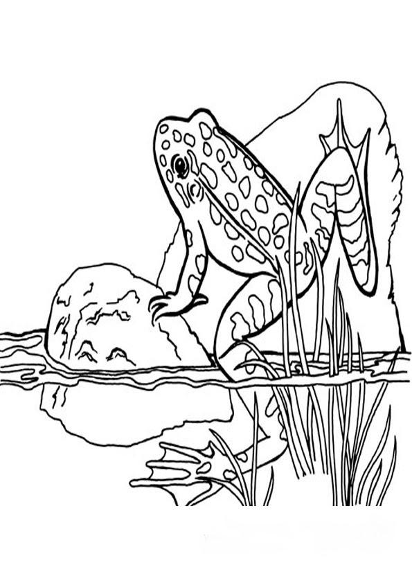 frosch bilder malvorlagen
