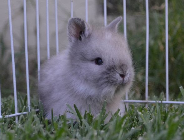 Craigslist Pets Modesto For Sale
