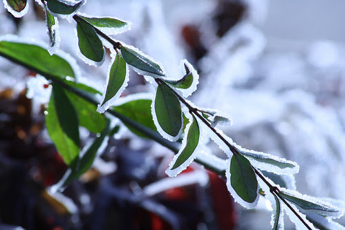 morning frost - 3
