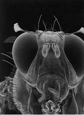 picture of a bug's eyes