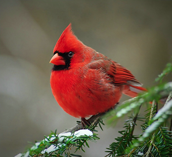 The real red angry bird. This was the find of the session, i reckon. This and the black bird. Found it here