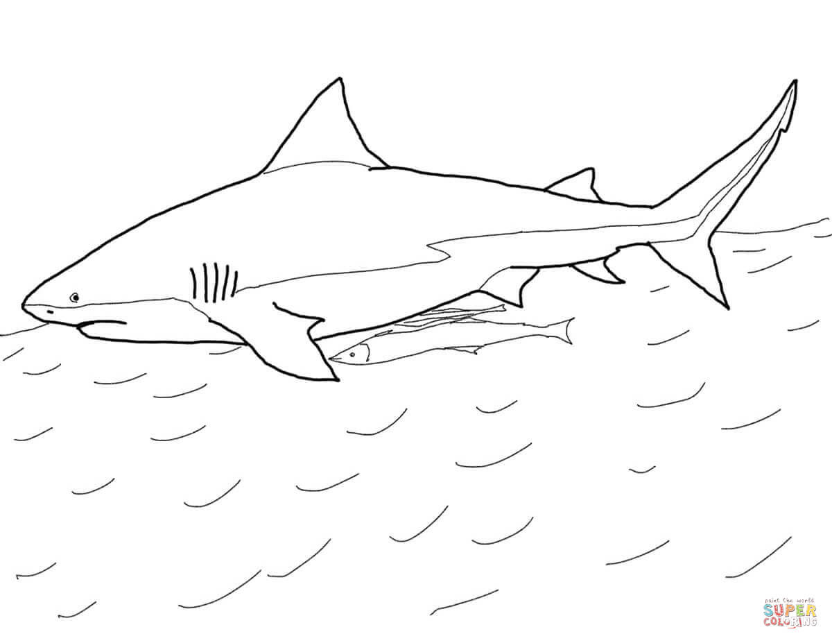 Bull Shark coloring page | Free Printable Coloring Pages