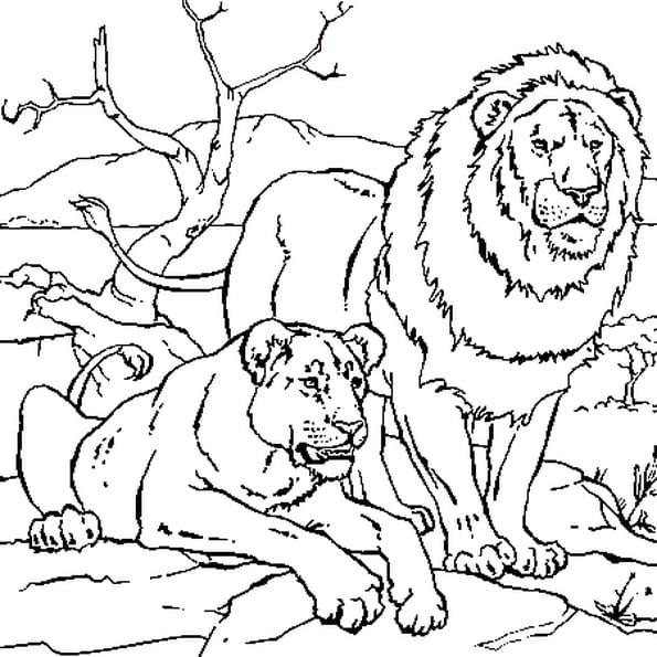 Coloriage204 Coloriage De Lion A Imprimer