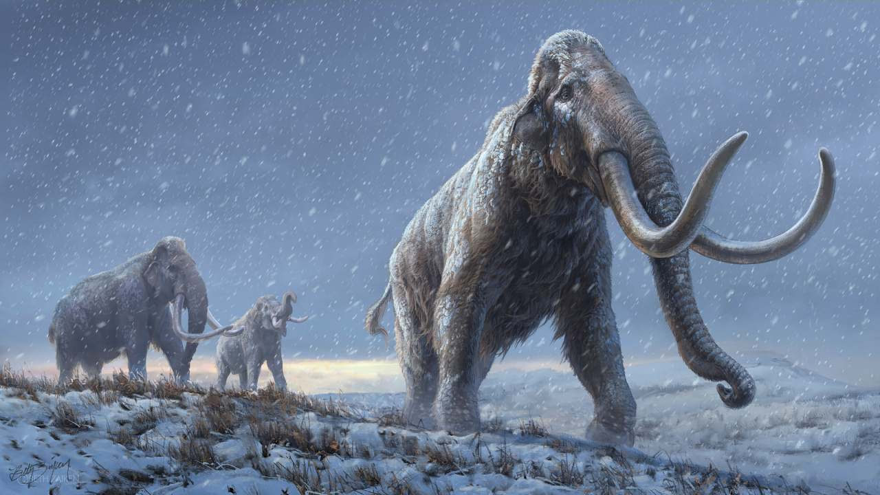 In an undated image provided by Beth Zaiken and the Centre for Palaeogenetics, an artist's conceptual image of the steppe mammoths that preceded the woolly mammoth. Genomic data — the oldest ever recovered from a fossil — reveals the origin and evolution of the Columbian mammoth. (Beth Zaiken/Centre for Palaeogenetics via The New York Times) -- NO SALES; FOR EDITORIAL USE ONLY WITH NYT STORY MAMMOTH DNA BY KATHERINE KORNEI FOR FEB. 17, 2021. ALL OTHER USE PROHIBITED. --