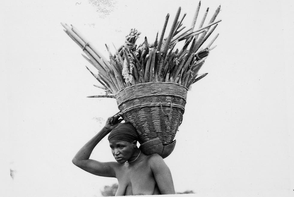 Nigeria, three-quarter profile, head and shoulders portrait of Gwari adult female carrying basket full of sticks on shoulder. Basket has pointed bootom, balanced in cracked pot. Female wearing head-cloth, neck-ornament. Medium: Gelatin silver print. Format: One of four prints mounted on album page.     . Small group of adult females and a child, sitting on ground outdoors. Wearing personal-ornaments including disc-shaped lip-plugs and ear-plugs, bowl-shaped hair-styles. Two females dressing hair of other two females, using small pointed tools. Female at right holding young child. Medium: Gelatin silver print. Format: One of four prints mounted on album page.