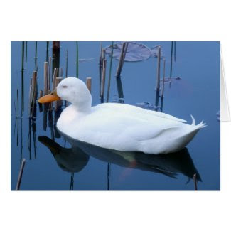 Sleeping White Duck Reflection Greeting Card