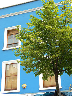 maison bleue.jpg