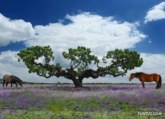 trees, 10