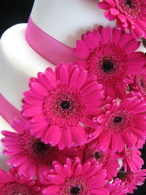 Pink Gerberas   Wedding Cakes