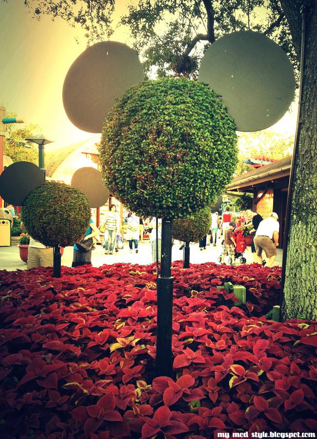 Disney Downtown7 shrubs