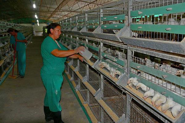 Los trabajadores de la Empresa Avícola de Ciego de Ávila ratificaron su eficiencia, al cerrar el 2018  con  índices económicos por encima del plan, pues sus ocho granjas de gallinas ponedoras sobrepasaron lo planificado en cuanto a la producción de huevos y los servicios.