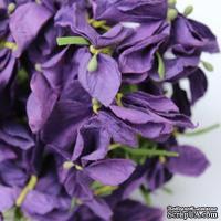 Польская гортензия, цвет ярко-фиолетовый - ScrapUA.com