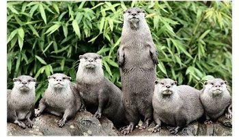 Zoo Londres
