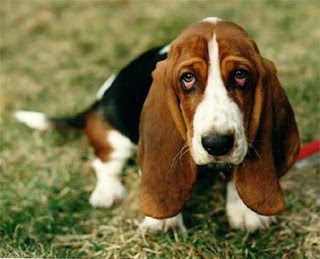 Tristeza En Los Perros La Depresión En Los Perros