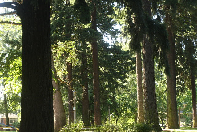 Summer, Oregon Park