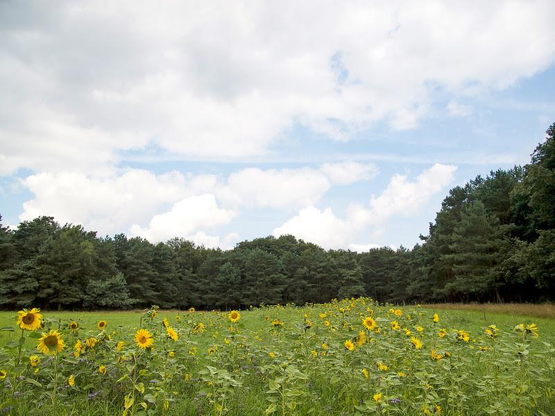 National Park The Hoge Veluwe