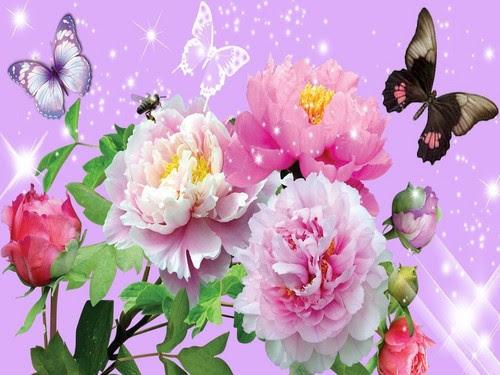 900 Wallpaper Bunga Dan Kupu Kupu  Paling Keren