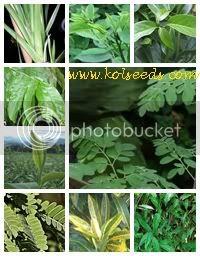 ชาผักพื้นบ้าน 9 ชนิด 9 in 1 9 Native Vegetables Tea