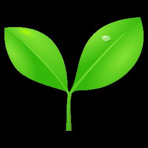 葉っぱのイラスト素材129 花植物イラスト Flode Illustration フロ