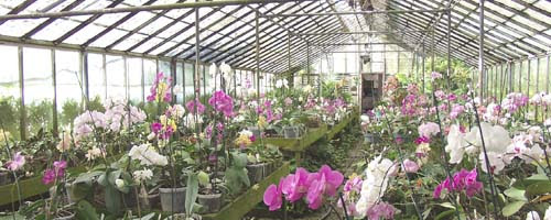 Growing Orchids In A Greenhouse