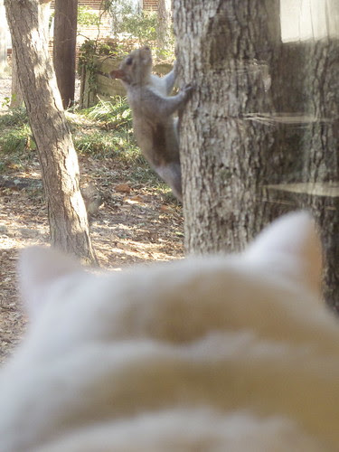 Nilla and the Squirrel 0028