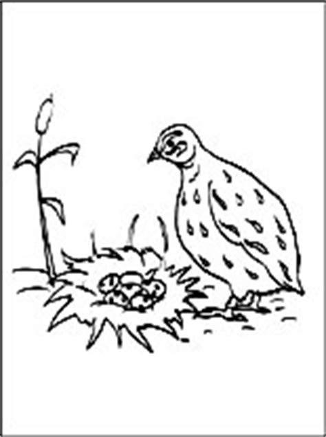 dessin  coloriage caille  imprimer coloriage