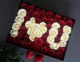 Gambar Bunga Mawar Merah Putih