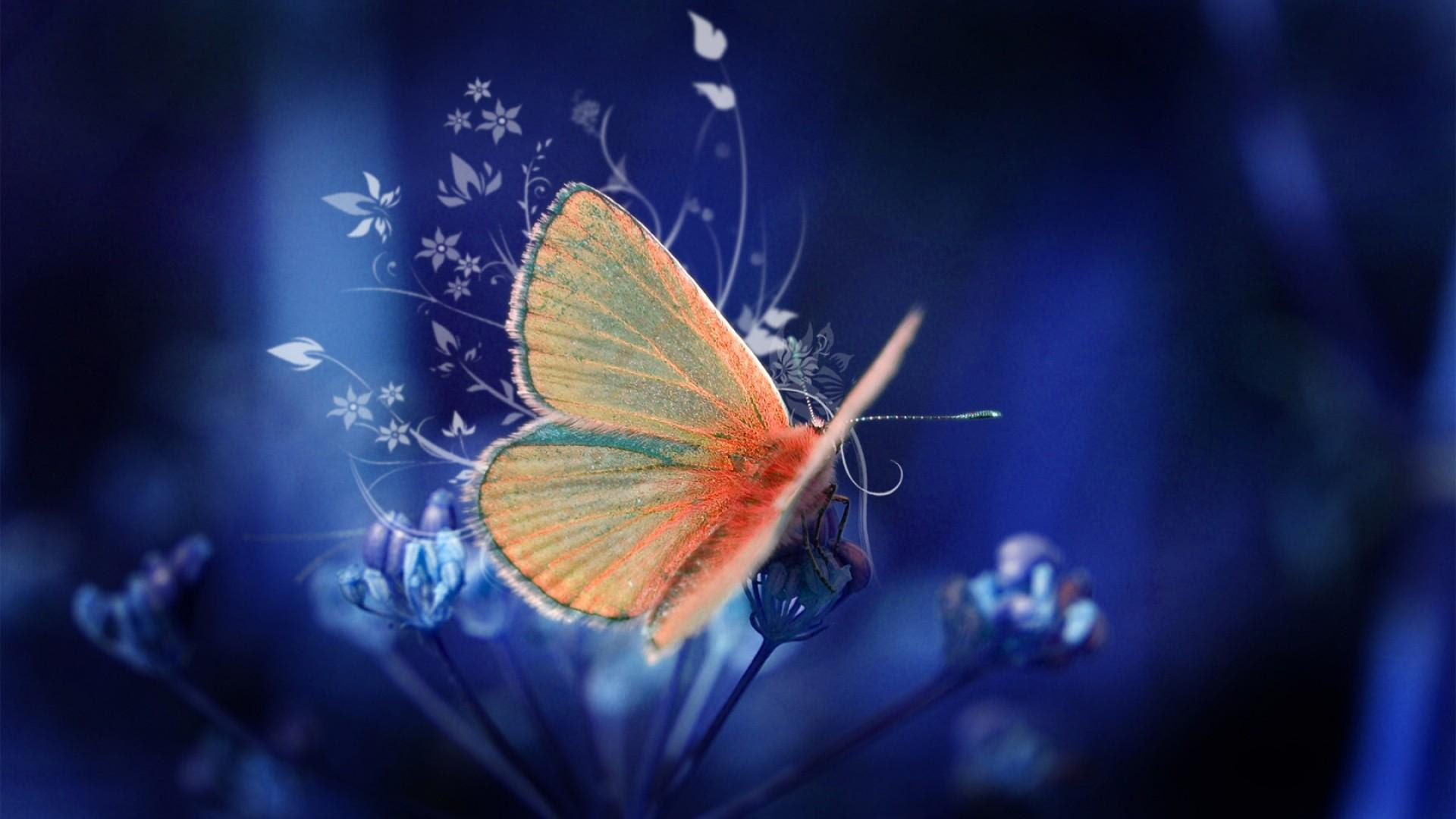 Download 3d Butterfly Butterfly Wallpapers For Your Mobile Cell Phone