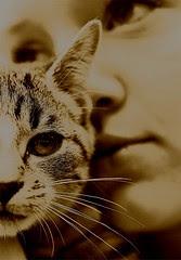 kitten by Teckelcar