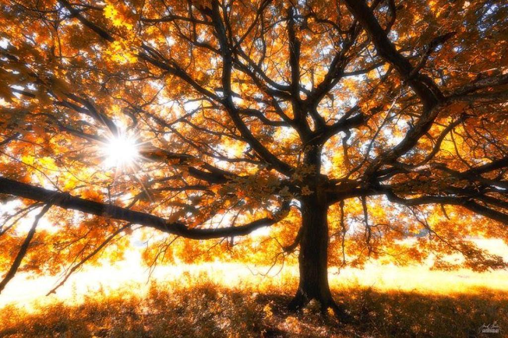 Os bosques outonais oníricos de um fotógrafo tcheco 09