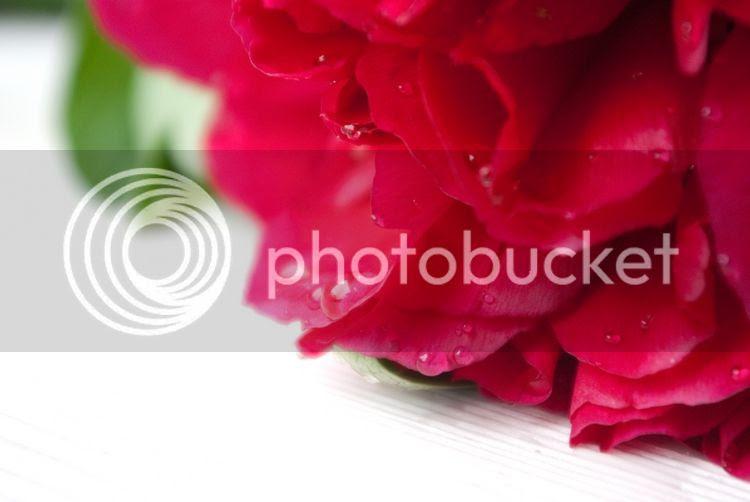 photo 20140511-IMGP9348small_zps0c064cbe.jpg