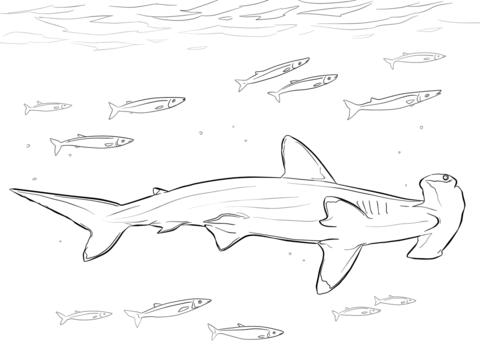 Dibujo De Tiburón Martillo Con Peces Piloto Para Colorear Dibujos