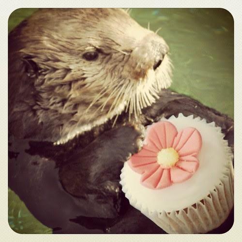 Cupcake Otter