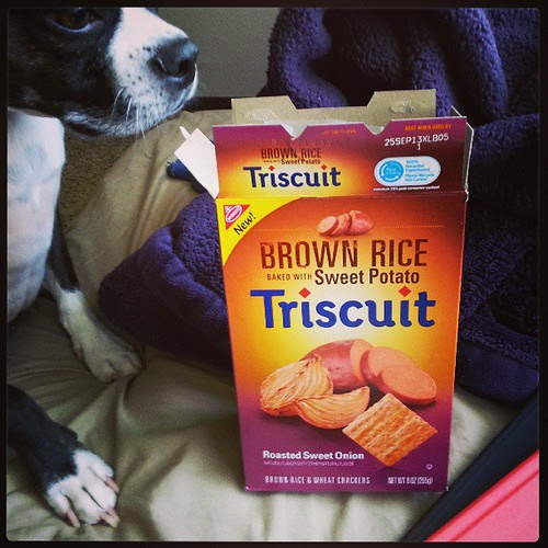 Sorry Steve, no onion for dogs! #triscuits