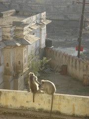 monkey morning
