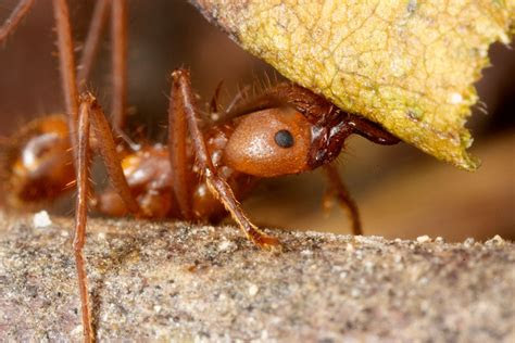 leaf cutter ants farm  moment  science indiana