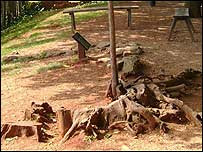 Restos de una cabaña de esclavos en la Hacienda Monticello