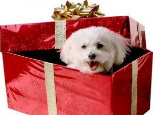 Regalar mascotas en imagenes de cumpleaños