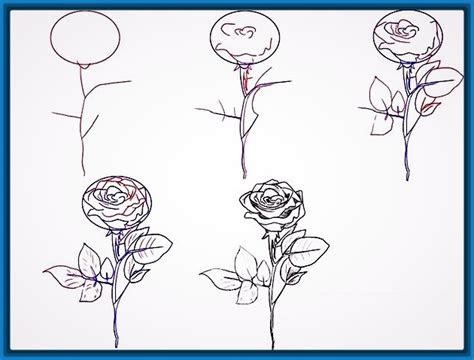 Best Como Dibujar Rosas A Lapiz Paso A Paso Faciles Image Collection