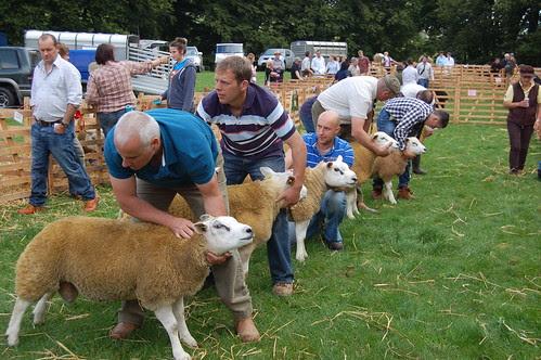Bowes Agricultural Show Sept 12 (2)