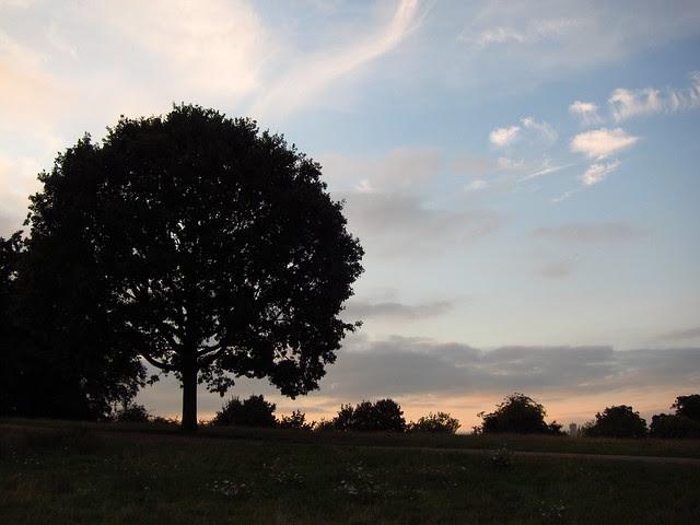 Hampstead Heath at Dusk
