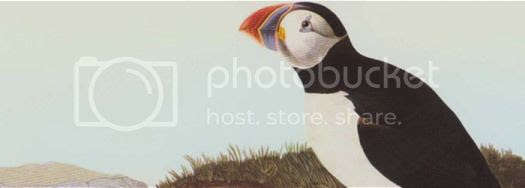 the only puffin species on the east coast