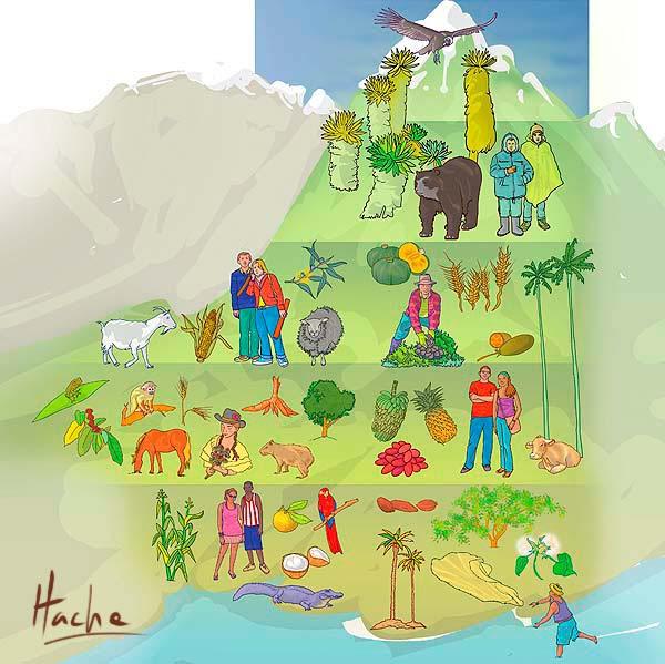 Ilustración pisos térmicos. Sociales grado noveno por Hache Holguín