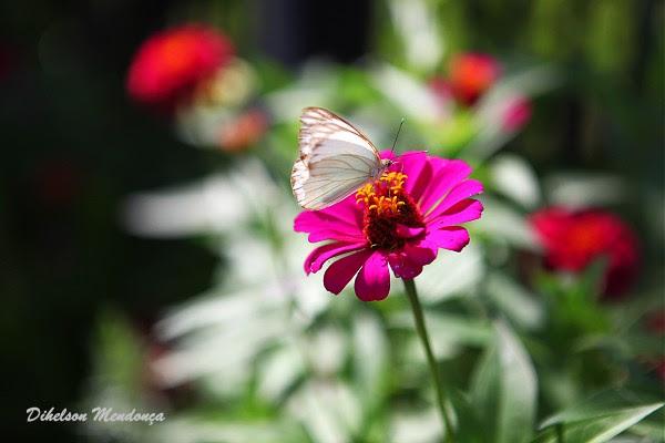borboleta 02