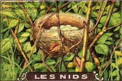 les nids 4