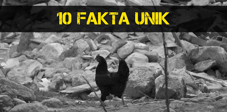 """10 Fakta Unik Seputar Gempa Lombok, """"Desa hantu"""" Pasca Gempa"""