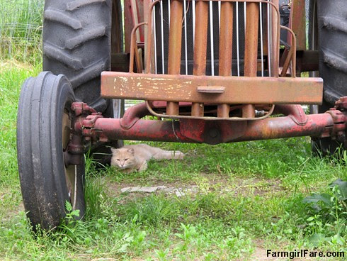 (27-2) Jasper lounging under the little old diesel tractor - FarmgirlFare.com