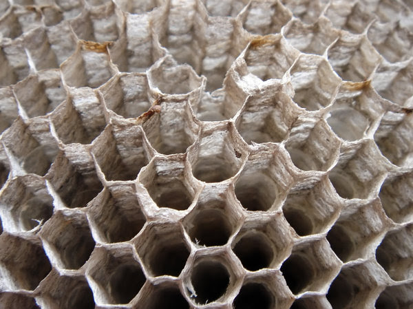 Wasp nest 1: Found this wasp nest in the roof of my house near the air conditioner, thought might be useful to someone.