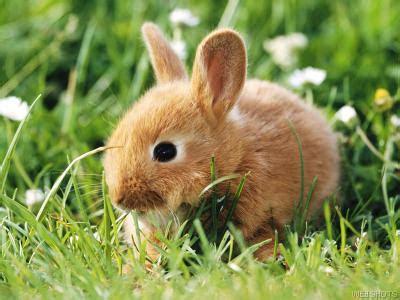 kelinci lucu  imut animal planet
