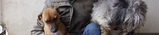 Defensores de los animales denuncian las operaciones a perros para evitar que ladren  (Imagen: ARCHIVO)